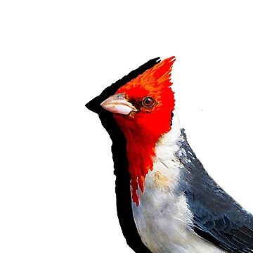 Red Crested Cardinal  by tobyjrobinson