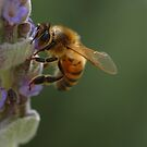 Bee by amygee