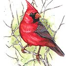 Northern Cardinal by primalarc