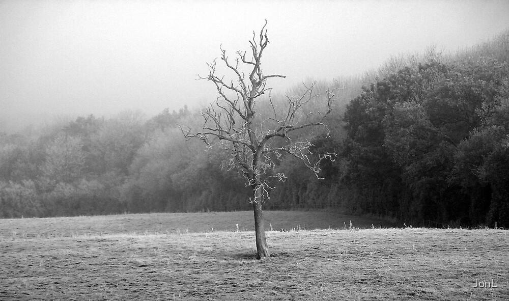 A Lonely Tree by JonL