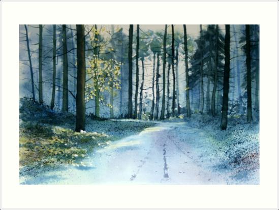 Forest Light by Glenn Marshall