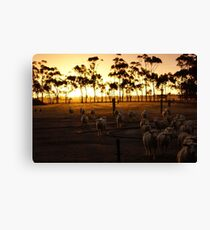 Bringing in the mob Canvas Print