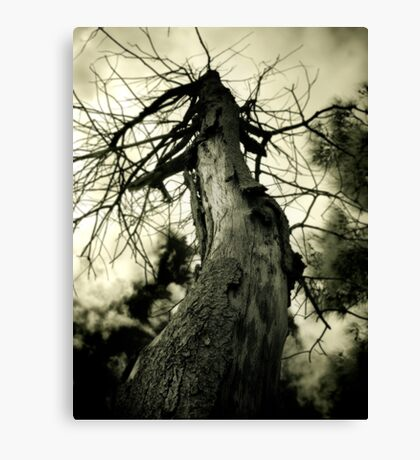 Deadwood Canvas Print