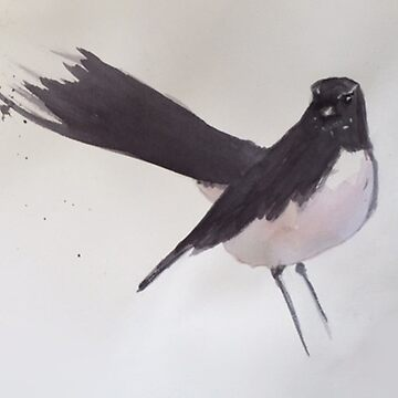 Willie Wagtail by ColinWilliams