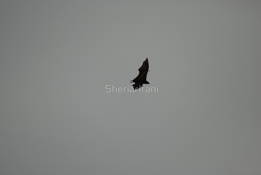Bat silhoutted against the evening sky 6 by SheriarIrani