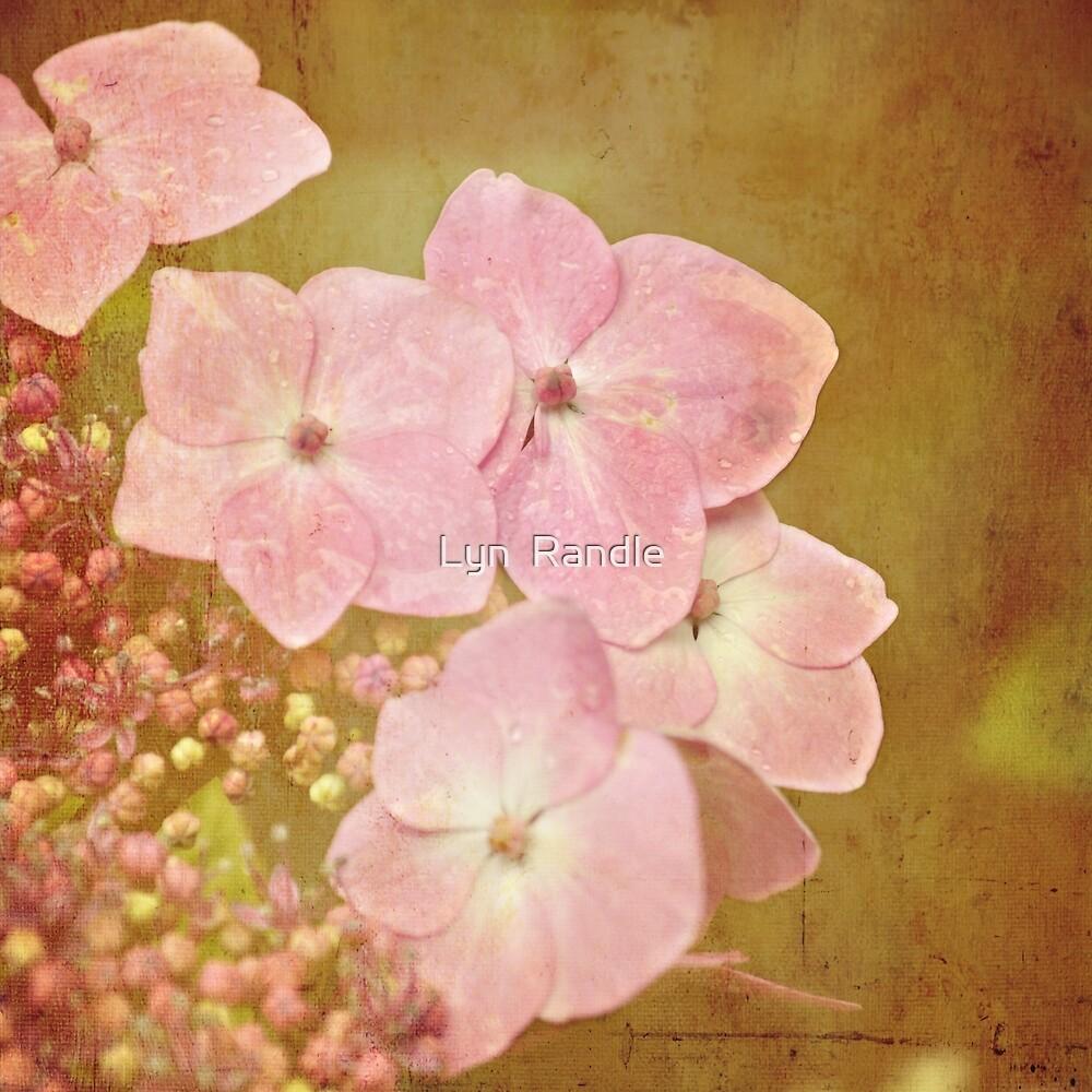 Pink Hydrangea flower. by Lyn  Randle