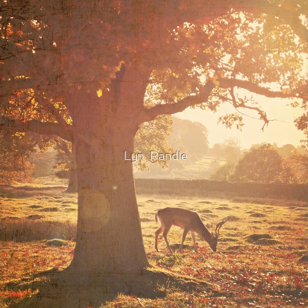 Lone Deer. by Lyn  Randle