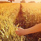 Walking through wheat field. by Lyn  Randle