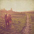 Horse. by Lyn  Randle