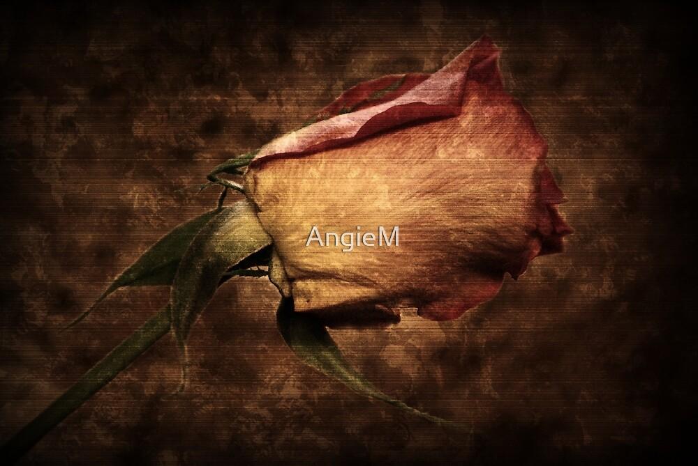 Old Rose by Angie Tirado