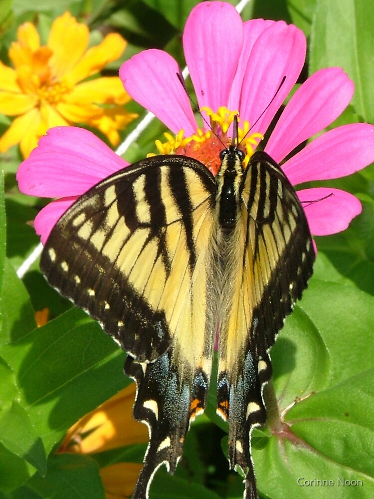 Swallowtail portrait by Corinne Noon