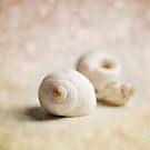 Shells. by Lyn  Randle