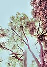Vintage Beech by SexyEyes69