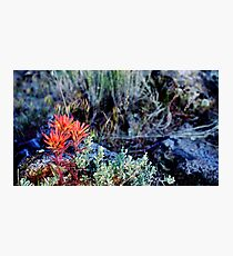 Spring in the High Desert Photographic Print