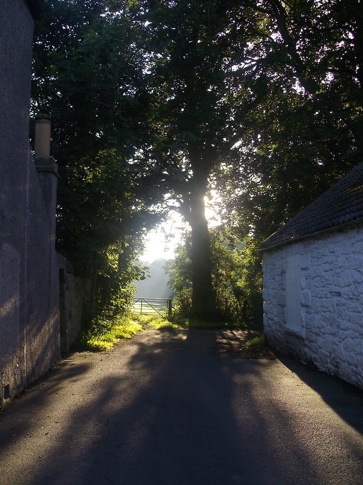 forest gateway by stefmck