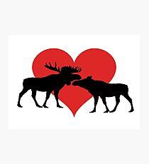 Moose Couple Photographic Print