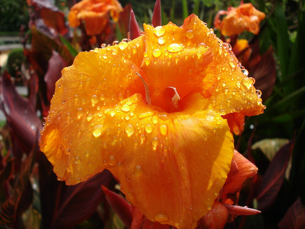 Orange flower in the early morning dew.. by mangodurian