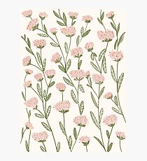 Spring Rose Garden Photographic Print