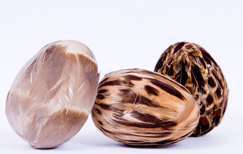 Feathered eggs by Alistair Balharrie