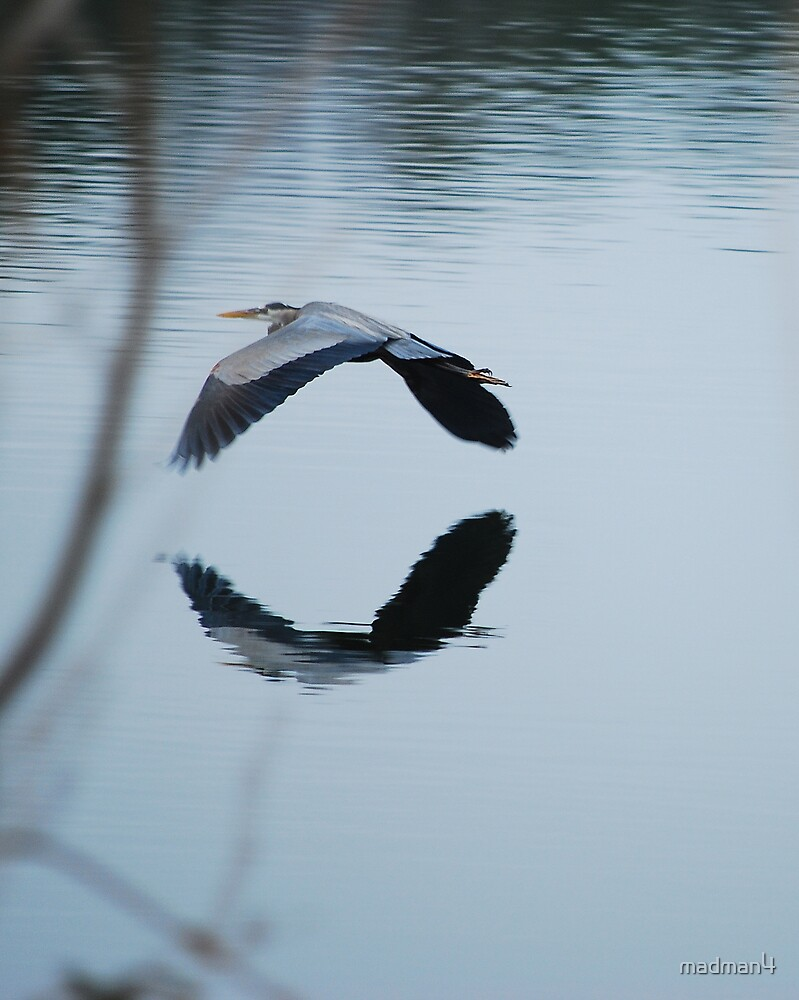 Heron Take-off Reflections by madman4