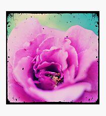 Home Grown Photographic Print