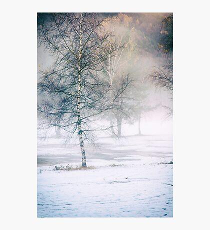 Birch and mist Photographic Print