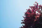 Lieber roter Baum von josemanuelerre