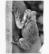 Treefrog Poster