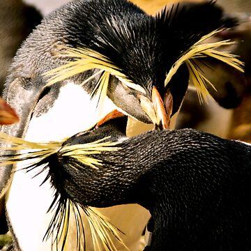 Penguins cleaning by nayamina