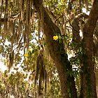 Allamanda And Oak Tree by Zina Stromberg