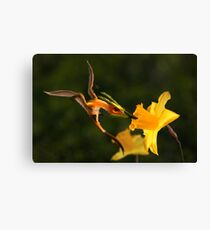 Welsh Dragon and Daffodils Canvas Print