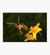 Welsh Dragon and Daffodils Photographic Print