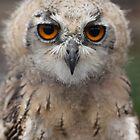 Baby Owl - whoos looking at you? by CallyM