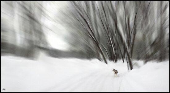 A Dog's Eye View by Wayne King