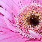 Gerber Pink by Wviolet28