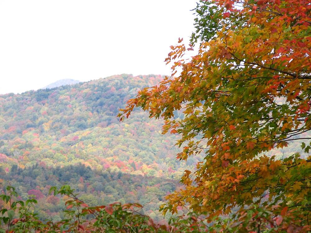 Fall by vivianlea