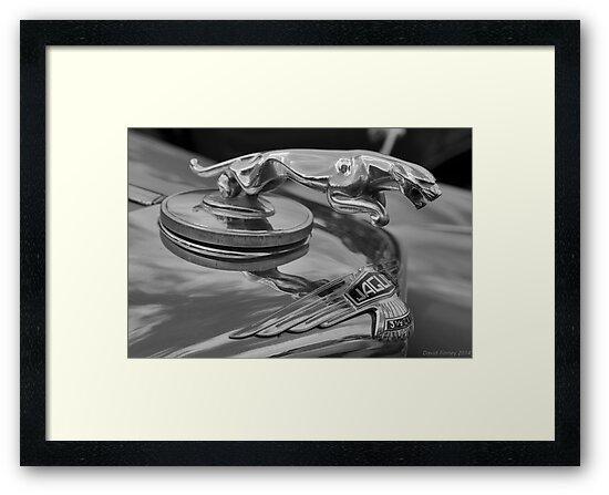 Jaguar by David Finney