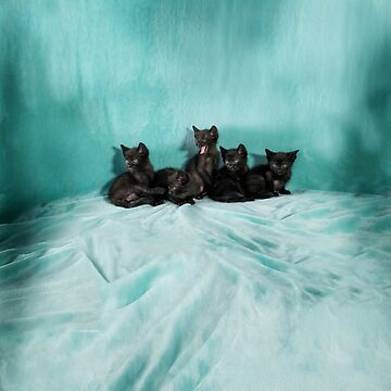 Five kittens 3 turquoise by jo-twinflame