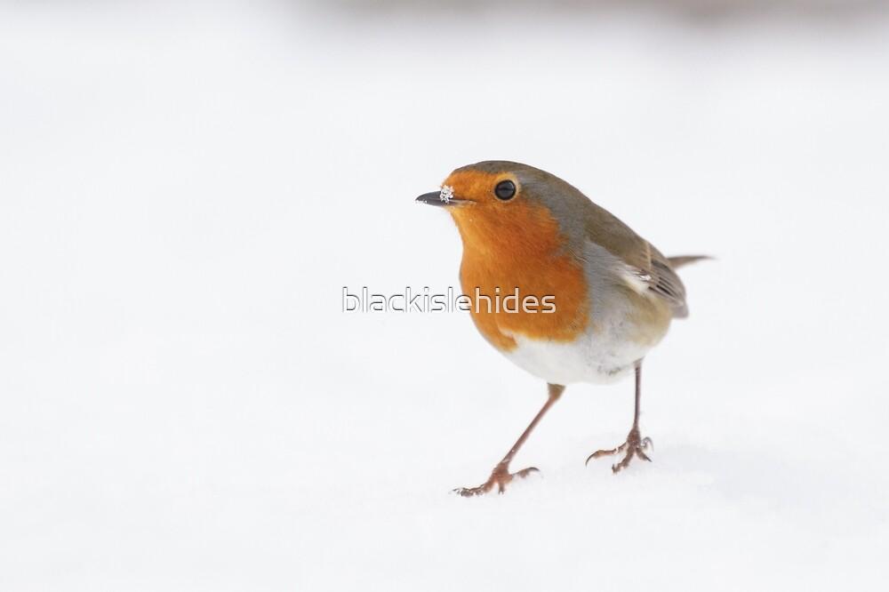 Winter Robin by blackislehides