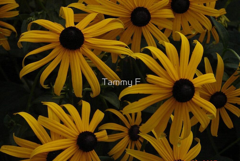 Black Eyed Susans by Tammy F