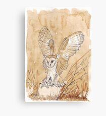 Barn Owl hunting 2 Canvas Print