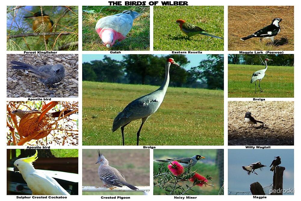 The Birds of Gulargambone Station by pedroski