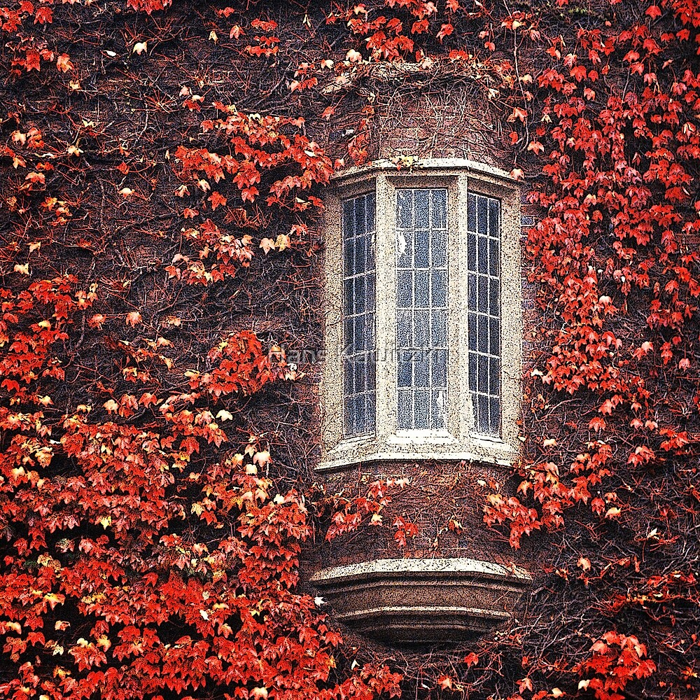 1365 Autumn Window by Hans Kawitzki