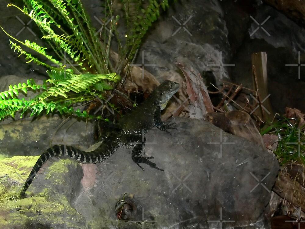 Marine Iguana by Sandra Chung