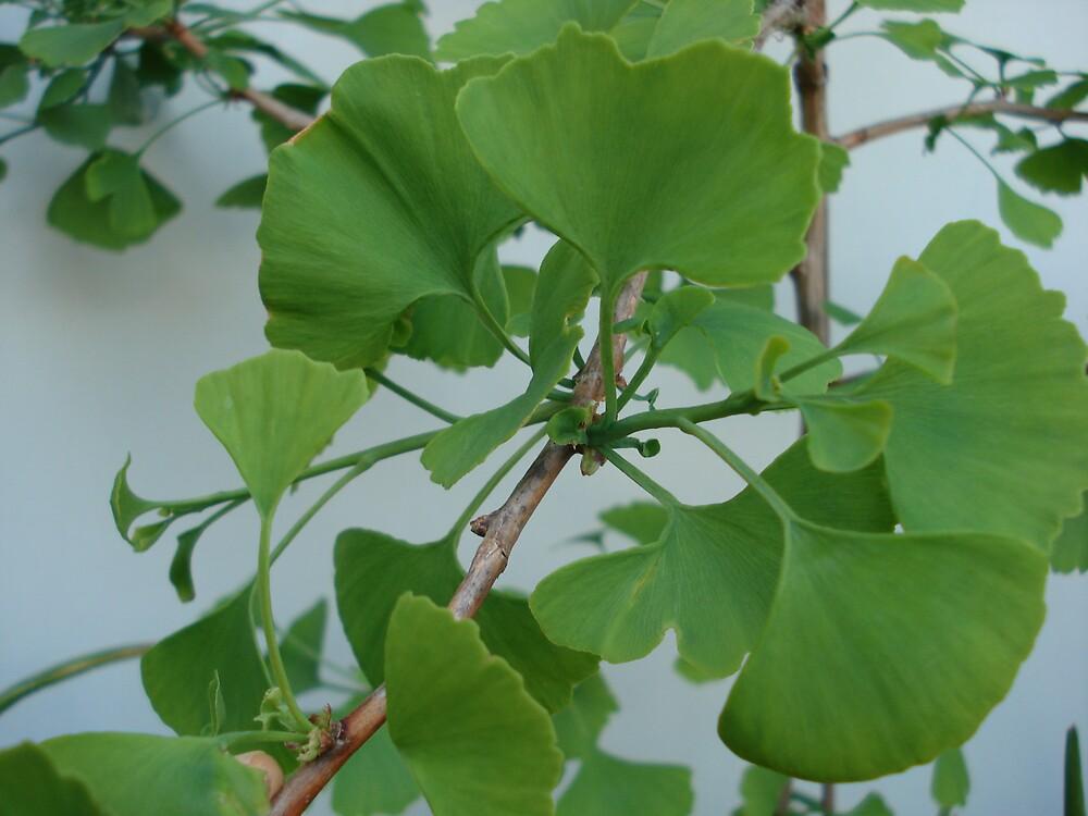 green tree by kveta