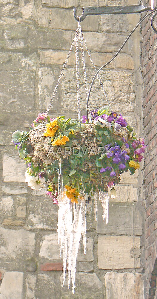 Spring Came Too Early And Winter Came Too Late - By York's Lendal Bridge by AARDVARK