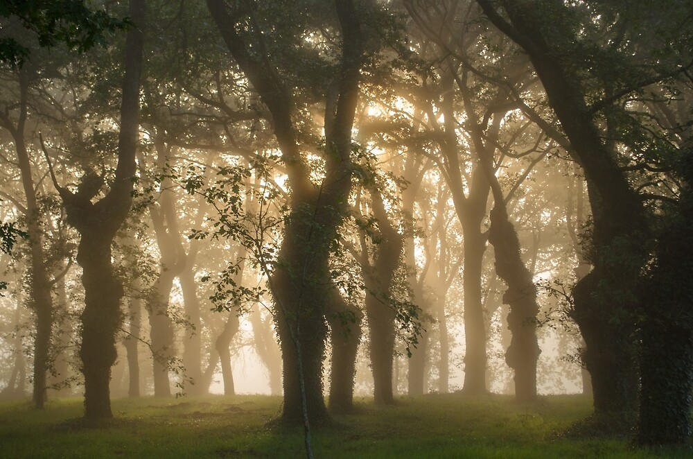 Camino Sunrise by emmelined