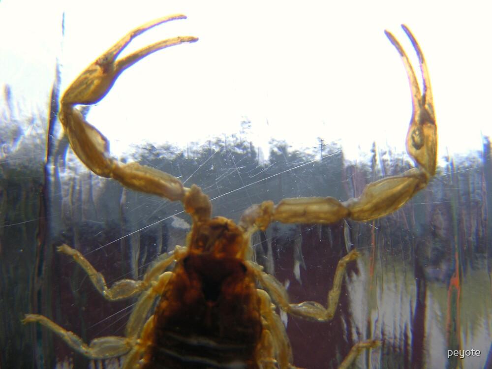 Scorpio Scorpion by peyote