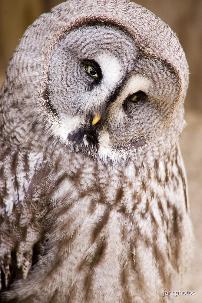 Great Grey Owl by jansphotos