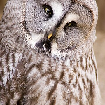 Great Grey Owl by jansphotos